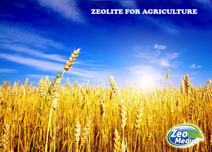 Zeolit for agriculture